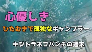 【競馬】キジトラネコパンチの週末3連休初日【パチスロ】