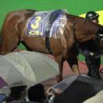 【競馬】2020 第33回 マイルチャンピオンシップ南部杯JpnI パドック 現地映像 アルクトス
