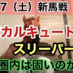 【2歳新馬】マジカルキュート、スリーパーダは固いのか!?【競馬】【複勝】