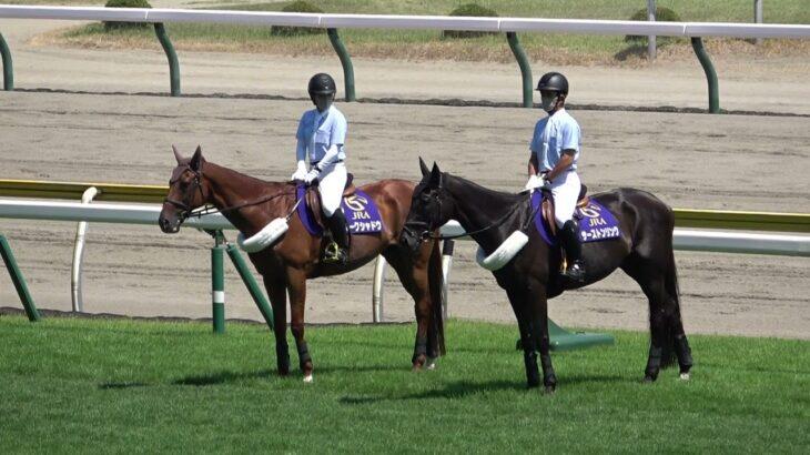 2021 新潟競馬場の誘導馬 ダークシャドウ 現役馬の方を見ながら、後方の誘導馬を待つ!! 現地映像